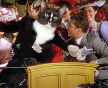 Trolley Song With Cat